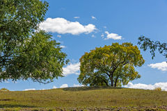 clouds and White Birch in the autumn Royalty Free Stock Photography