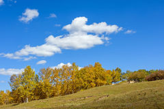 clouds and White Birch in the autumn Stock Images