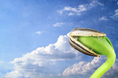 cloudscape幼木向日葵 免版税库存图片