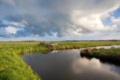 Cloudscape über niederländischem Ackerland mit dem Weiden lassen von Schafen Stockfotografie