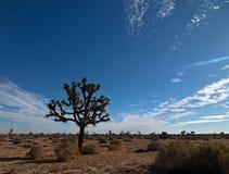 Cloudscape дерева Иешуа в южной пустыне Калифорнии высокой Стоковое Изображение RF