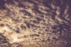 cloudscape 与月亮的每夜的天空在树后 户外在晚上 免版税库存照片