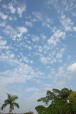 Cloudscape. Tree and cloudscape in Southern China Royalty Free Stock Photography
