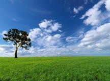 Cloudscape dei prati dell'albero di paesaggio di estate Fotografie Stock