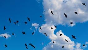 Cloudscape med en flock av flygsvartfåglar med spridning påskyndar royaltyfri bild