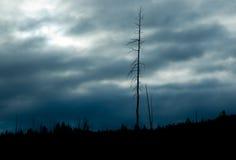 Cloudscape over bos Royalty-vrije Stock Fotografie