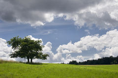 Cloudscape Over Cherry Tree Royalty Free Stock Images