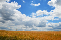 Cloudscape over crop field Royalty Free Stock Photos
