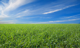 Cloudscape over green field. Scenic view of green field under blue sky and cloudscape Royalty Free Stock Photos