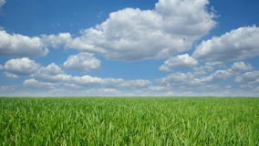 Cloudscape over green field stock footage