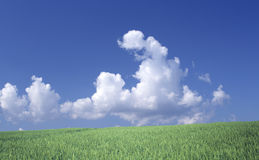 Cloudscape over green field Stock Photos