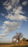Cloudscape over the savannah Stock Image