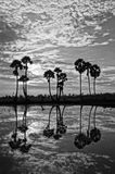 Cloudscape and palm trees in silhouette reflect on water Royalty Free Stock Photos