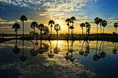 Cloudscape and palm trees in silhouette reflect on water in sunr Stock Photo