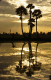 Cloudscape and palm trees in silhouette reflect on water in sunr Stock Image