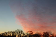 Cloudscape. Pink orange clouds over trees at sunset Royalty Free Stock Photo