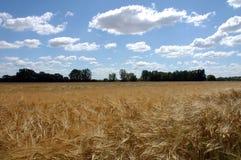 cloudscape, pole kukurydzy Zdjęcia Royalty Free
