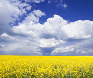 Cloudscape and rapeseed field Royalty Free Stock Image