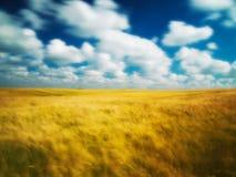 Cloudscape sobre campo de maíz Foto de archivo