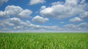 Cloudscape sobre campo verde metrajes