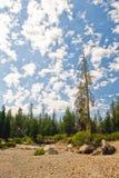 Cloudscape sopra la foresta Fotografia Stock