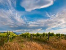 Cloudscape sopra la vigna nell'area Nuova Zelanda di Marlborough Fotografie Stock Libere da Diritti