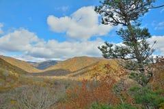 Cloudscape in taiga 3 di autunno Fotografie Stock Libere da Diritti