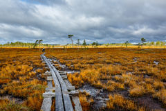 Cloudy autumn day on the colorful swamp. Finland Royalty Free Stock Photo