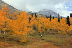 Cloudy autumn day in the Wasatch Mountains. Stock Photos