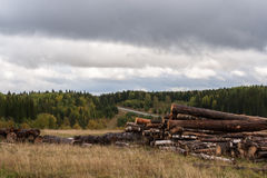 Cloudy autumn landscape. Warehouse of felled trees, forest and g Royalty Free Stock Photo