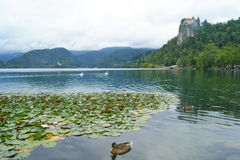 Cloudy Bled Royalty Free Stock Images