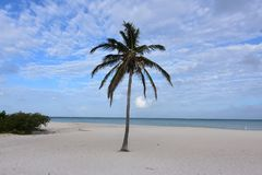 Cloudy and blue skies in Aruba with a palm tree. On the beach Stock Photography