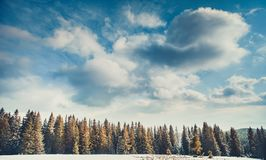 The cloudy blue sky above the woods. Carpathians. Royalty Free Stock Photo