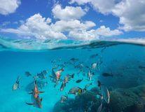 Cloudy blue sky shoal of tropical fish underwater. Cloudy blue sky and a shoal of tropical fish with coral underwater, split view above and below water surface royalty free stock image