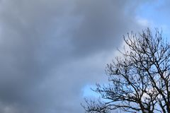 Cloudy blue sky with tree royalty free stock photography