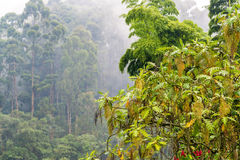 Cloudy Cloud Forest View Stock Photo
