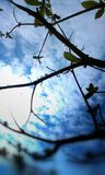 Cloudy Day. Almond tree  and clouds go hand in hand. Cloudy day look from almond tree . scattered clouds Stock Photo