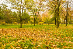 Cloudy day in the autumn park Royalty Free Stock Photos