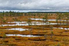 Cloudy day on the autumn swamp. Finland Stock Photography