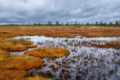Cloudy day on the autumn swamp. Finland Royalty Free Stock Photos
