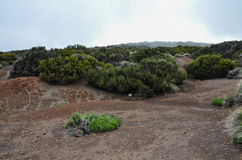 Cloudy Day in El Teide National Park Royalty Free Stock Photos