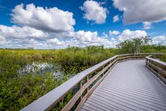 Cloudy day at Everglades National Park. The marshes, swamps, and wetlands of the Everglades are home to some of the most interesting wildlife and vegetation royalty free stock image