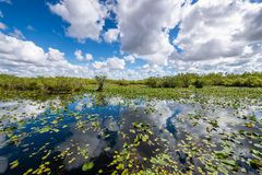 Cloudy day at Everglades National Park. The marshes, swamps, and wetlands of the Everglades are home to some of the most interesting wildlife and vegetation royalty free stock photo