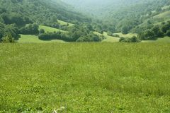 Cloudy day in the forest meadow green Royalty Free Stock Photo
