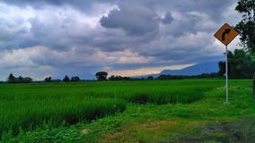Cloudy day. This Photo shows Rice fields Green with weather cloudy, and there usherette increasingly add impression in this Photo Stock Images