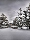 Winter in forest, cloudy midday Stock Photos