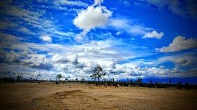 Cloudy desert sky with Joshua trees in mojave desert Stock Photo