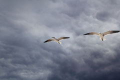 Cloudy dramatic sky with seagull flying Stock Photography