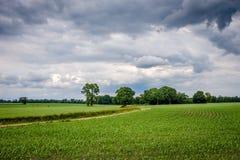 Cloudy Dutch Summer landscape in June near Delden Twente, Overijssel Royalty Free Stock Images