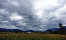 Cloudy Farm Day. A cloudy sky above a cornfield in the country Stock Photos